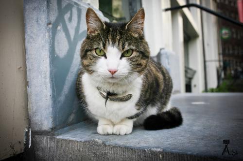 Кот в Амстердаме, Голландия