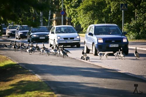 Хельсинки. Пешеходный переход.