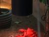 секс у черепашек под красным фонарем