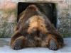 Медведь. Зоопарк Риги.